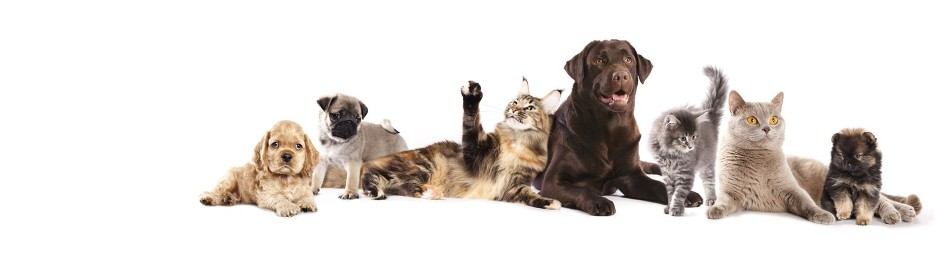 cura animali